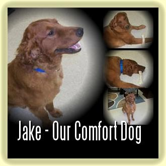 Jake-WAC Comfort Dog
